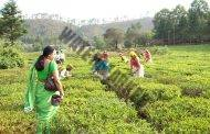 Organic Herbal Teas in Nainital