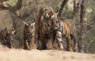 Wildlife in Uttarakhand