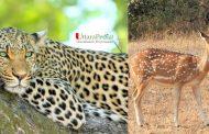 वन्यजीव सप्ताह (Wildlife week) विशेष : उत्तराखंड के आरक्षित क्षेत्रों को जानिए