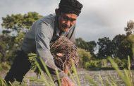 आखिर क्यों ??? किसानों पर रचित कविता : निर्मला जोशी
